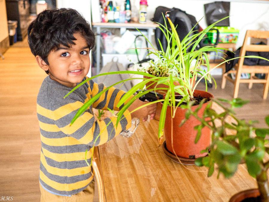 Boy watering plant