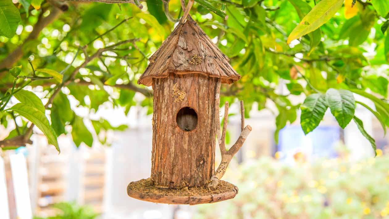 Wooden birdhouse hangs from tree branch